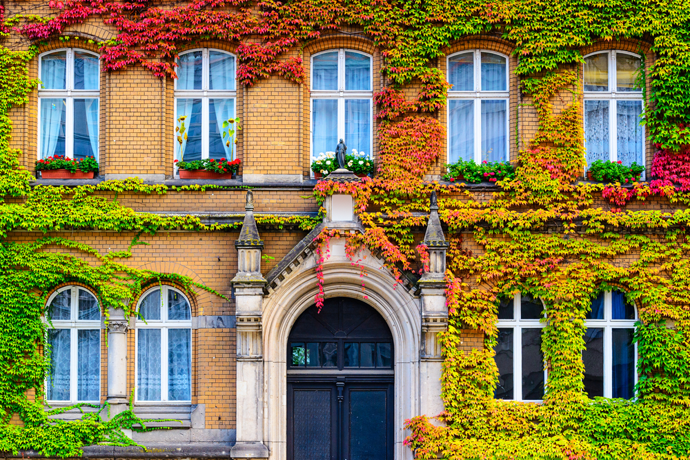 Vine covered building facade in Berlin, Germany.